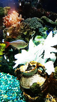Fish in lavish aqquarium